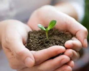 Advantages Of Growing Vegetable Seedlings: The Numbers And Nuances Of A Startup